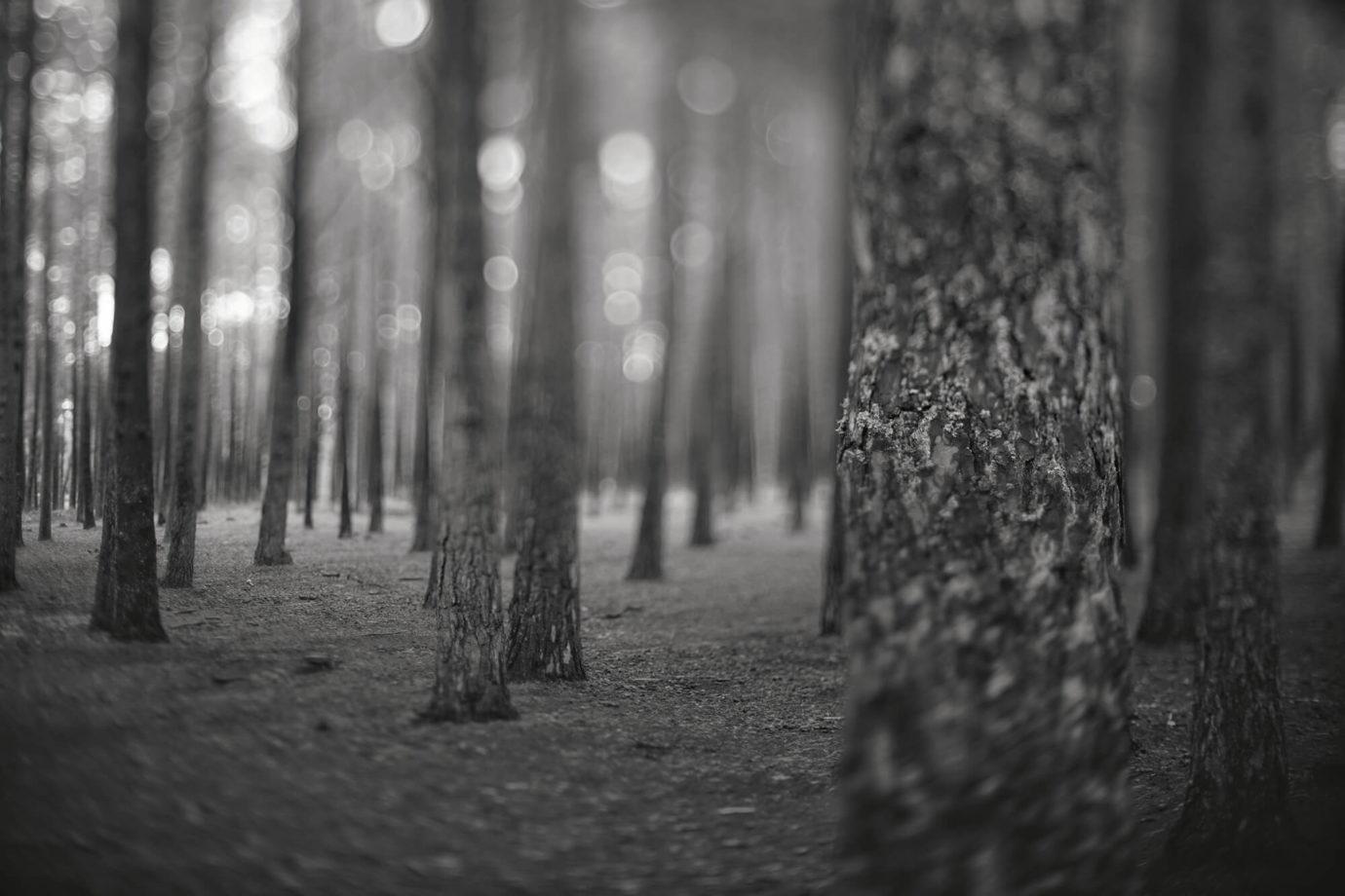 Fotografie von Armin Saage