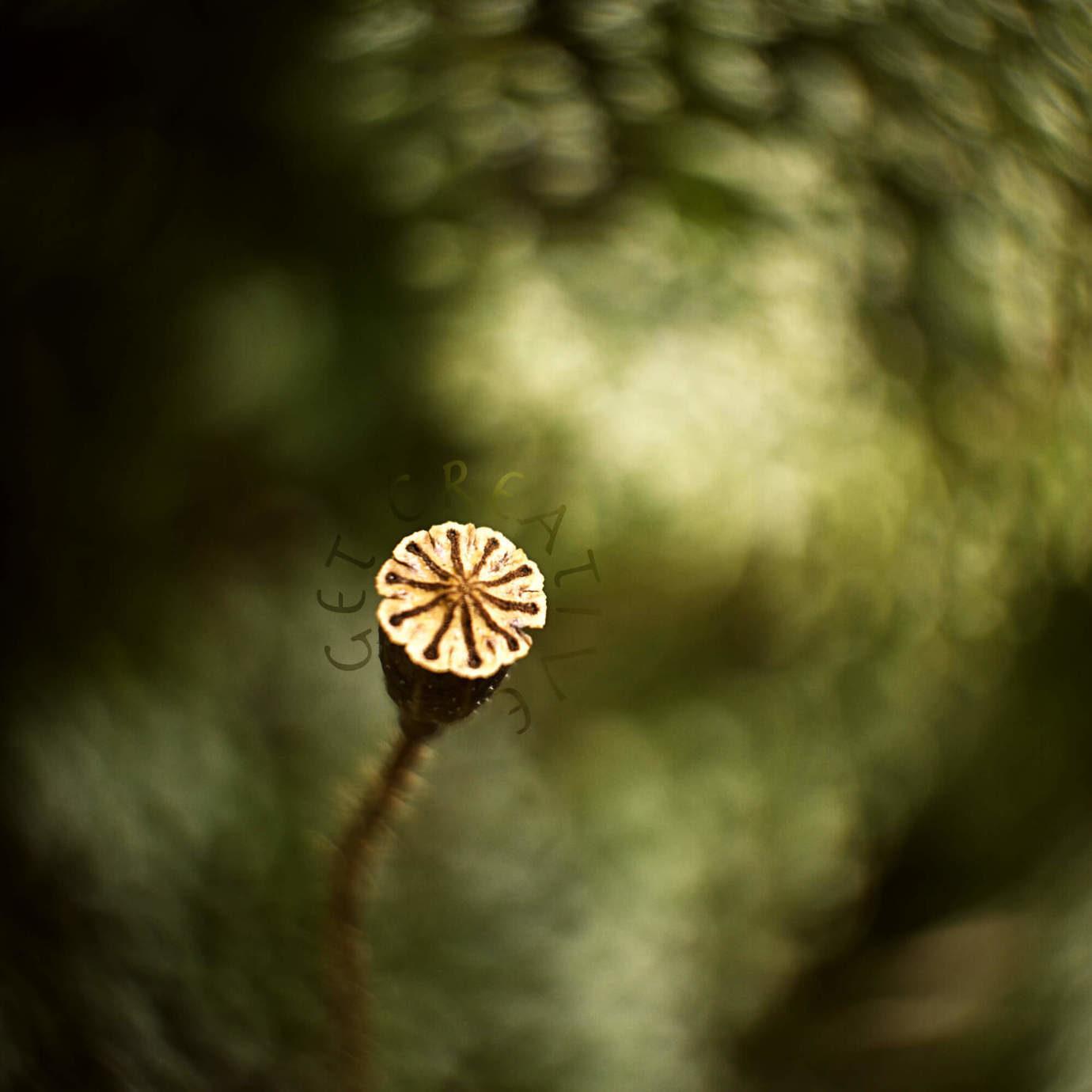 Fotografie / Melanie Herzog